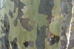 paula patton images nue