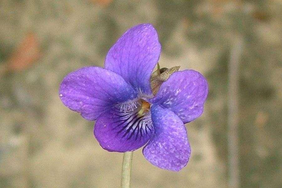 Close Up Of Flower Photo Sheldon Navie